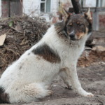 Lyskovo_Wachhund, was der wohl bewacht...